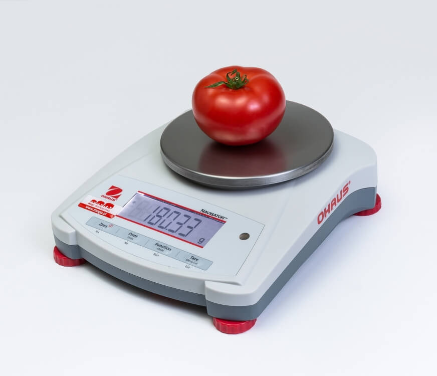 Pomidor na wadze